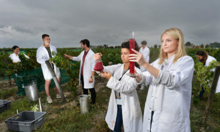 A la découverte des travaux l'Institut des Sciences de la vigne et du vin en collaboration avec l'INRA